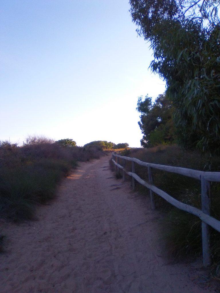 Camino arena