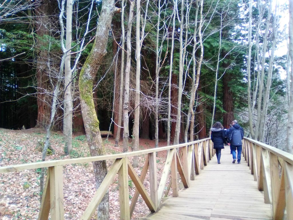 Acceso bosque secuoyas Cantabria