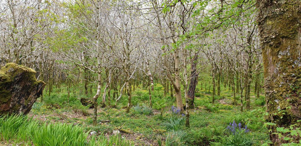 Bosque con árboles jóvenes