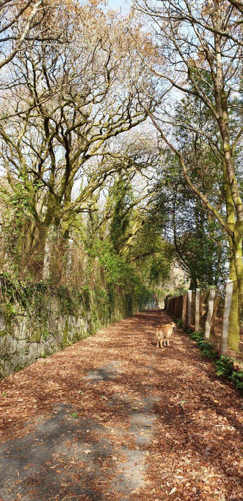 Camino empedrado rodeado de árboles