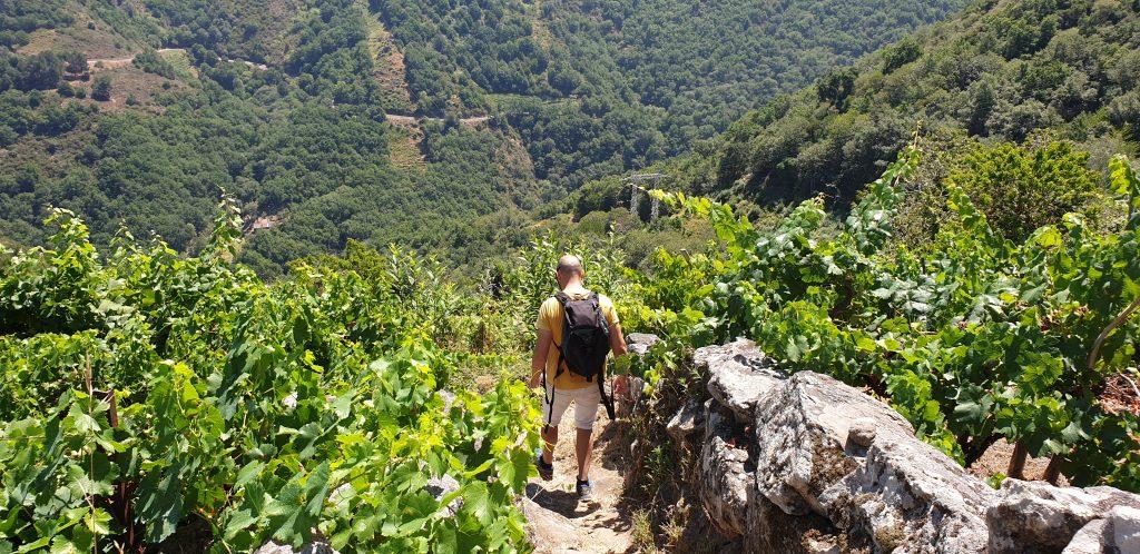 Sendero entre viñedos